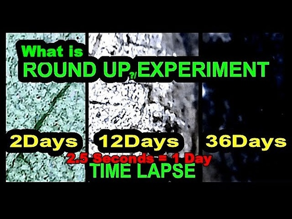 What is Round Up Effect Experiment - Description of RoundUp Power Max