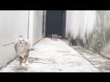Коты очень смешно прыгают)