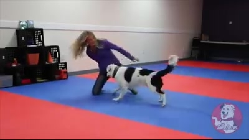 Собака-акробат