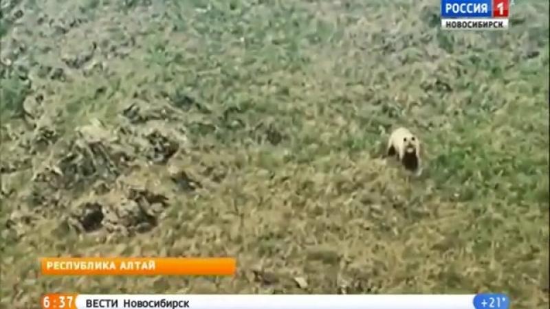Новосибирский путешественник снял на видео медведя » Freewka.com - Смотреть онлайн в хорощем качестве