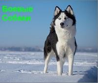 боевые собаки фото