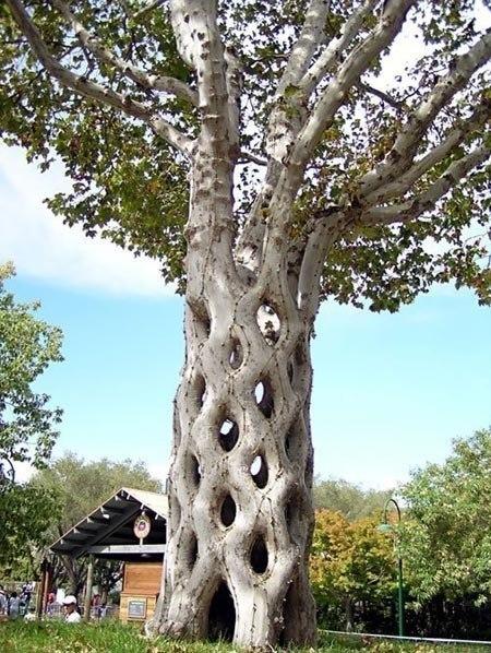 Удивительное дерево