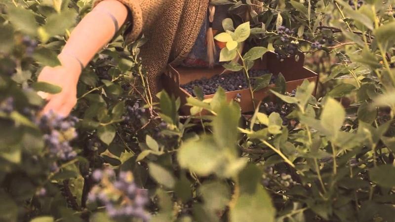 Kinfolk Saturdays Picking Berries