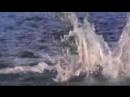 001_--ПРИЁМ космопорт...--супер-ХИТ певца ПРОРОКА САН БОЯ с морскими животными