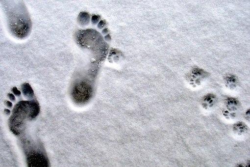 В целинном районе Алтайского края 3-летняя девочка в лютый мороз ушла домой из детского сада полностью раздетая