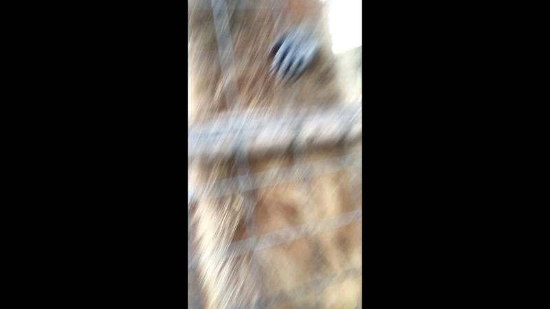 Еноты в зоопарке