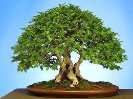 чернаямагия - Магия растений. Магические свойства растений. Обряды и ритуалы. Амулеты и талисманы из растений.  ZUWWZ9OeTLY