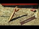 Сонный древесный Богомол / Sleepy Wood Mantis