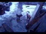 Коты драчуны грязи не боятся