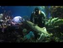 Представление в океанариуме Нептун г Санкт Петербург