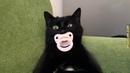 Приколы с кошками и котами 1 Кот сосущий соску