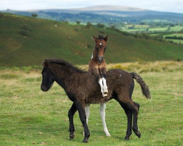 duncan george #horse