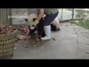 Друзья немного няшности всем в ленту тяжёлые будни работницы зоопарка
