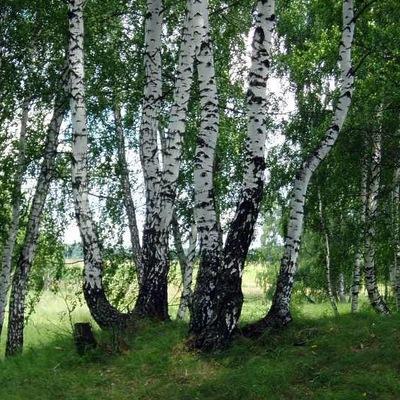Максим Балацкий, 19 мая , Луганск, id26435906