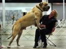 Большие собаки, как и большие мужчины…