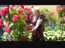 Формируем плетистую розу-Школа цветоводства