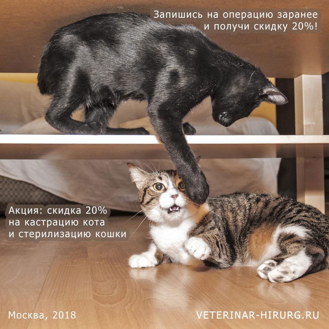 Заказать кастрацию кота со скидкой 20% при предварительной записи на операцию по Акции