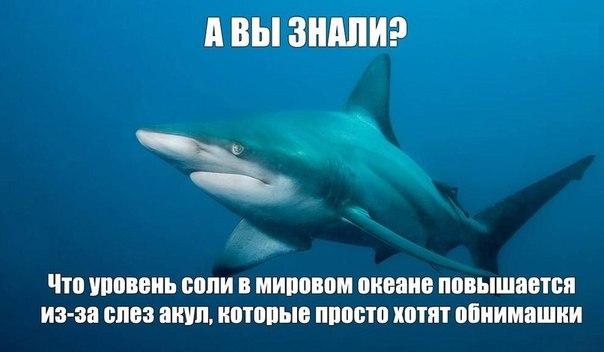 https://pp.vk.me/c543106/v543106856/f5b0/U7XWpzrhaVo.jpg
