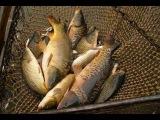 фидер все о нем секреты рыбалки