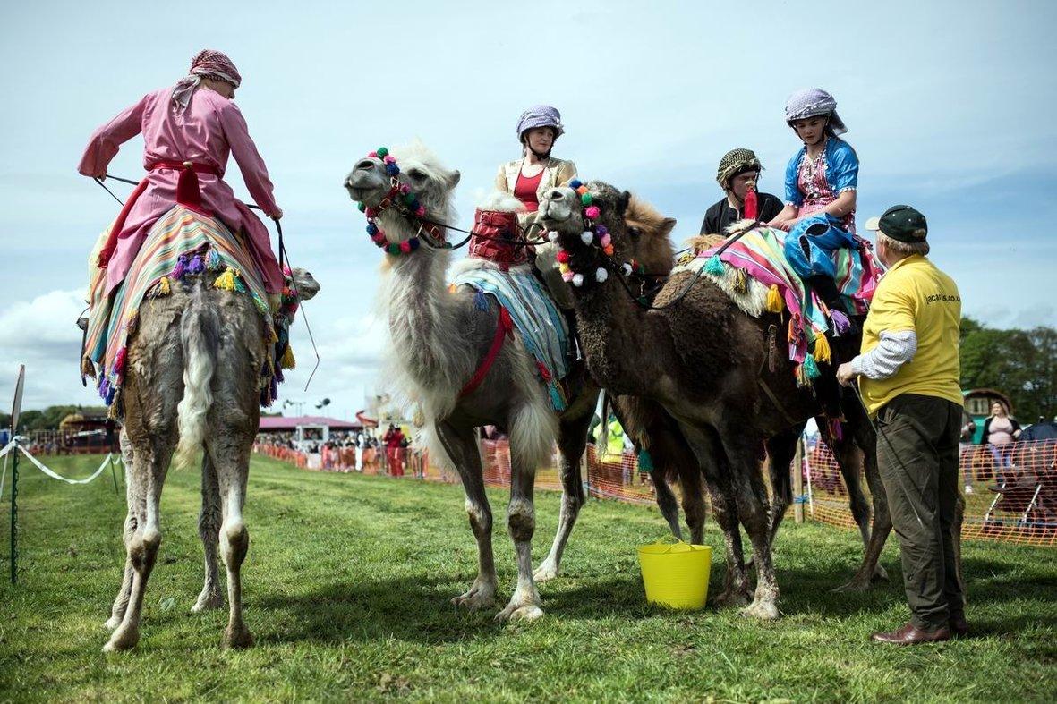 Мы тоже любим ездить на верблюдах: Неожиданный британский экстрим