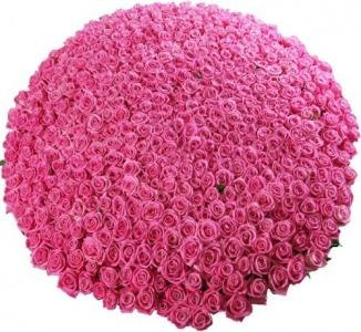 Только у нас роза премиум длина 70 см