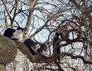 Коты-это птицы, которые прилетают весной первыми. Сегодня в России отмечается День кошек!