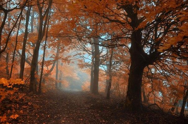 Мистические леса нашей планеты