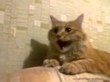 смотреть всем!!!! кот смеётся КАК накуренный