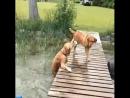 собака веселое хи