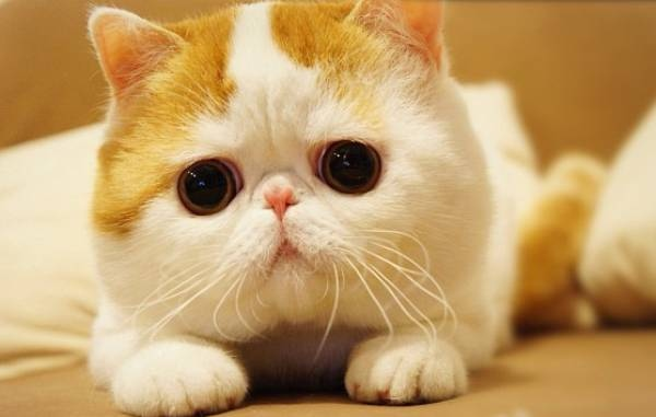 the 40 cutest gifs in the history of the internet buzzfeed
