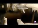 自然界の狂戦士たちの死闘10選【第六弾】