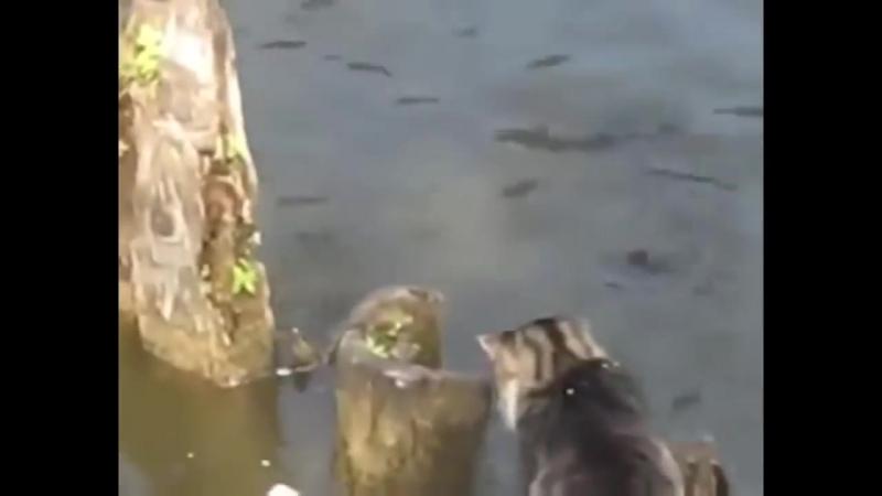 [Андрей Kа] Кот, сука, резкий! Fast cat