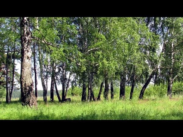 2 ЧАСА Спокойная Музыка для Сна ~ Флейта, Пение Птиц, Гармония...