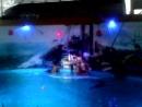 Моржи танцуют