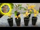 🌹🌹🌹РАССАДА АМАРАНТА ! Выращивание из семян.