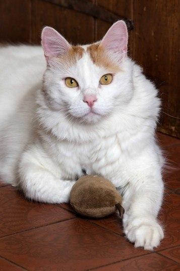 3-летнему коту Элиасу