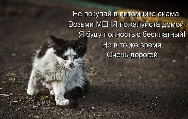 Трогает за душу ... (картинки, стихи и т.д. о животных) | сlaws.ru ...