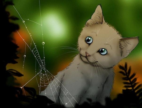 Коты воители картинки самые красивые - 21