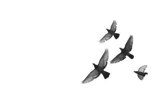 Alai oli-крылья скачать