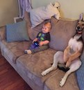 Хорошо зафиксированные ребенок и собака в постоянном присмотре не нуждаются