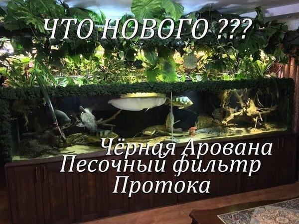 Что нового в моих аквариумах Песочный фильтр,протока,черная арована,скаты родились