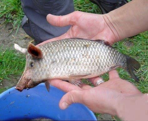 Рибалка як стиль життя