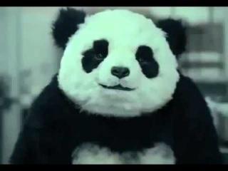 смешная реклама панда-Смешные видео приколы