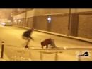 Араб с Бомбой и Динамитом Страшные приколы над лю mp4
