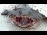 самые страшные животные планеты