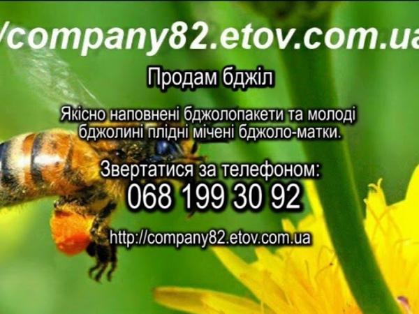 Где купить пчёл: продажа пчелопакетов и пчелиных плодных маток на протяжении всего сезона