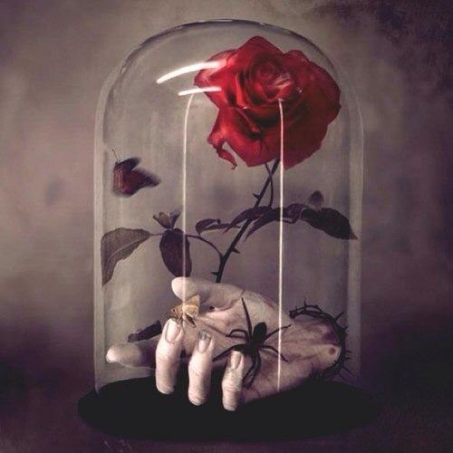 Роза в стекле
