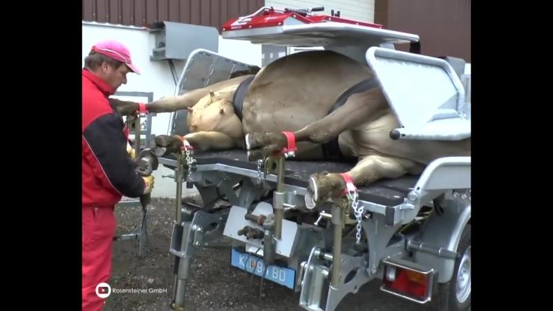 Передвижной станок для фиксации коров