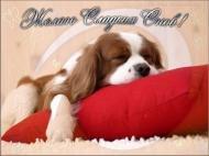 Спокойной ночи любимый