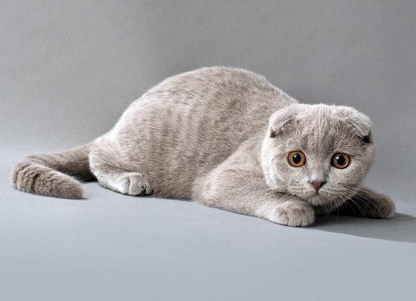 Кішки та коти і все про них